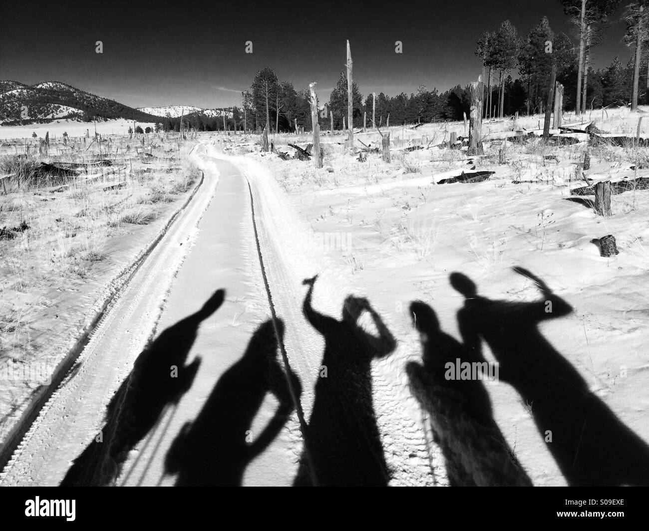 Human shadows on snow covered Coconino National Forest, Kendrick Park, Arizona, as the team takes a quick break - Stock Image
