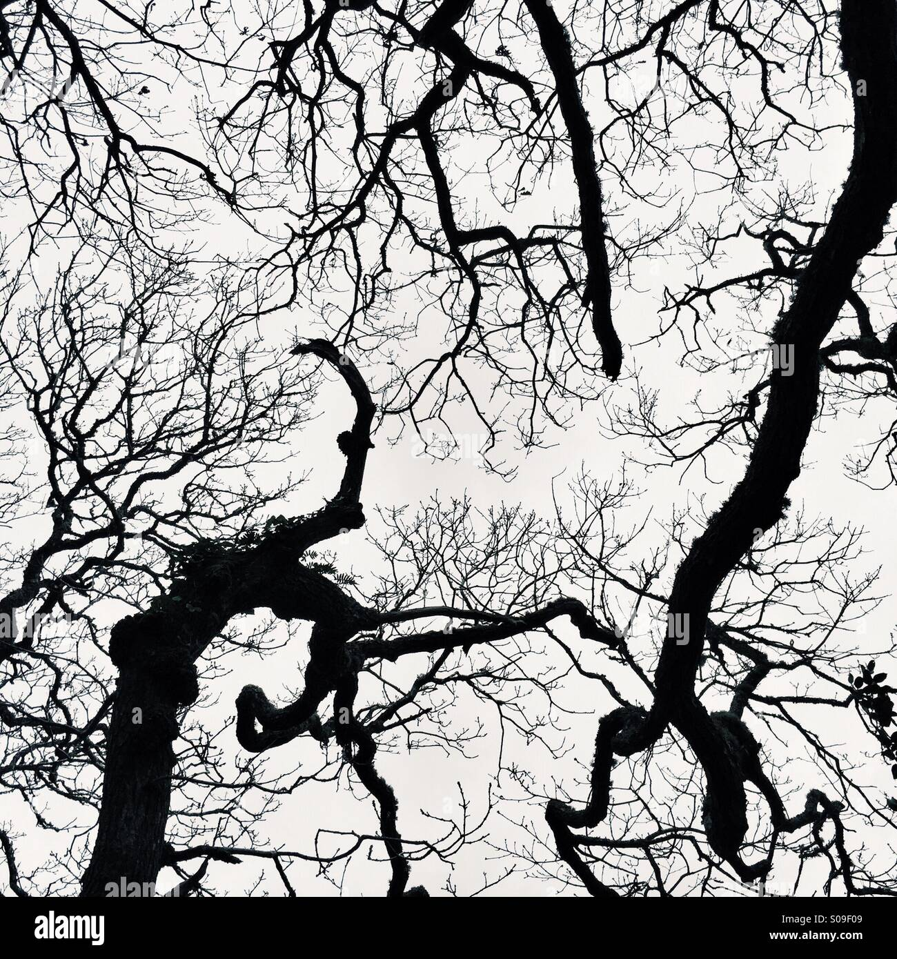 Silhouetted trees in wintry sky Stock Photo