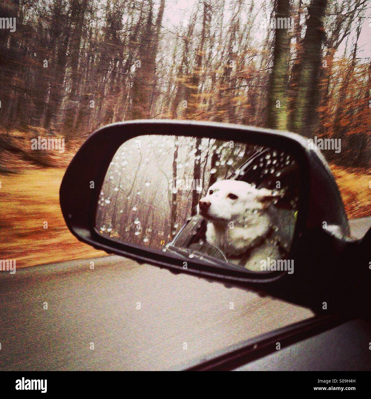 Dog in car reflection in rear view mirror - Stock Image