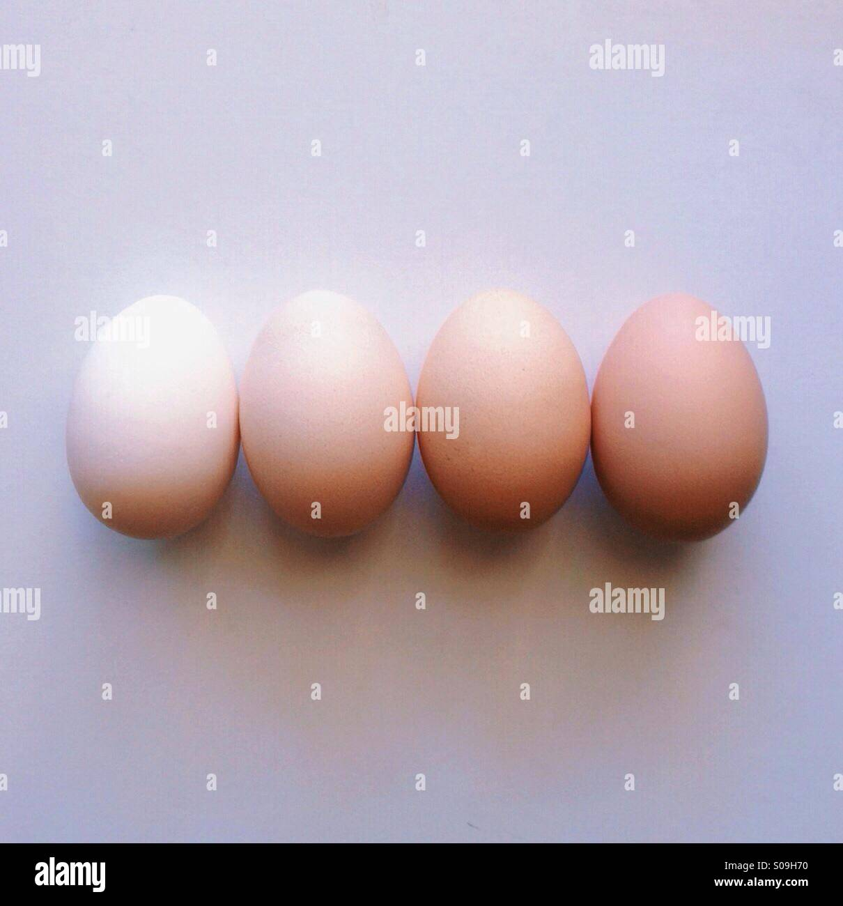 Ombregg - Stock Image