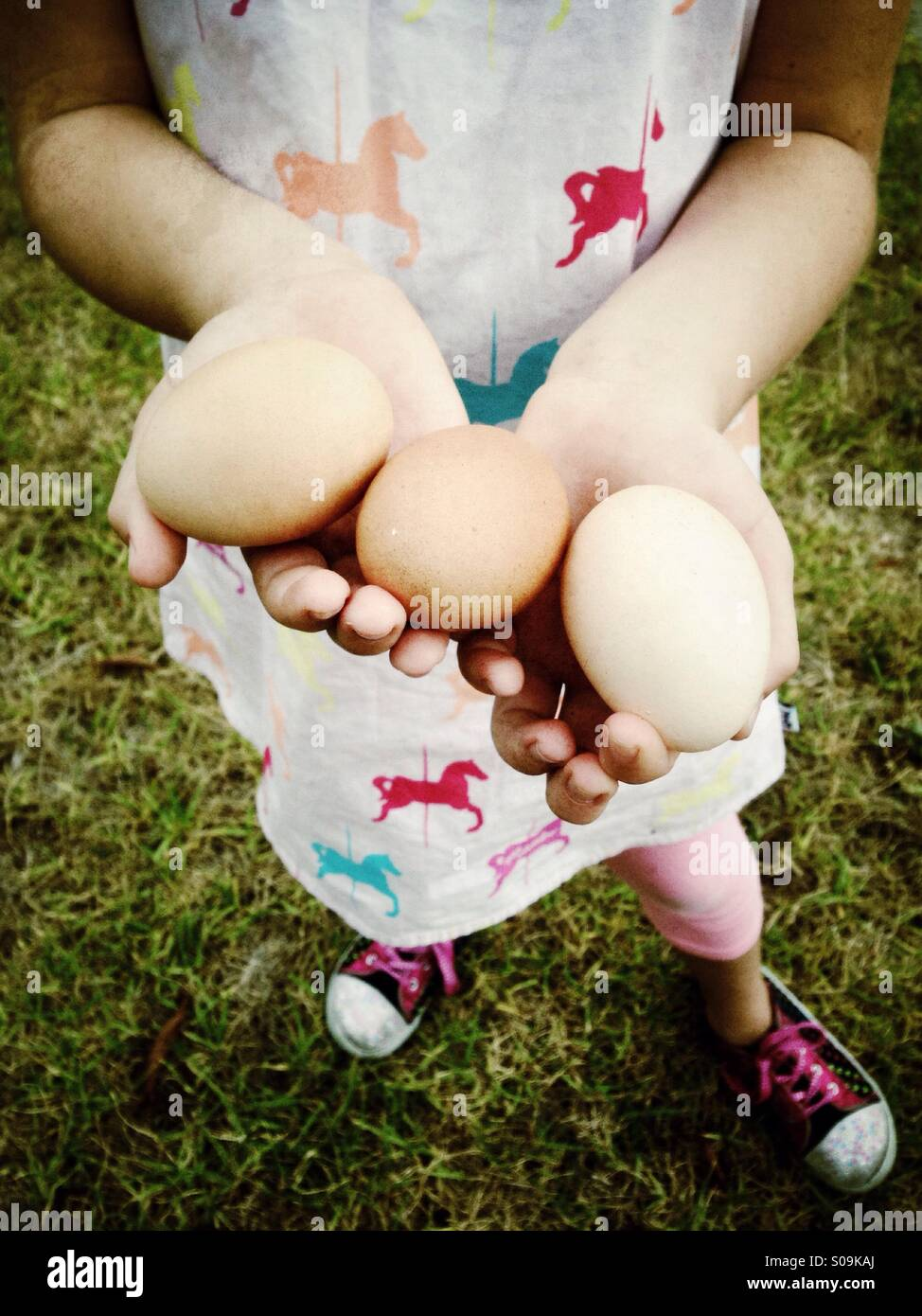 Three fresh eggs in the hands of a little girl - Stock Image