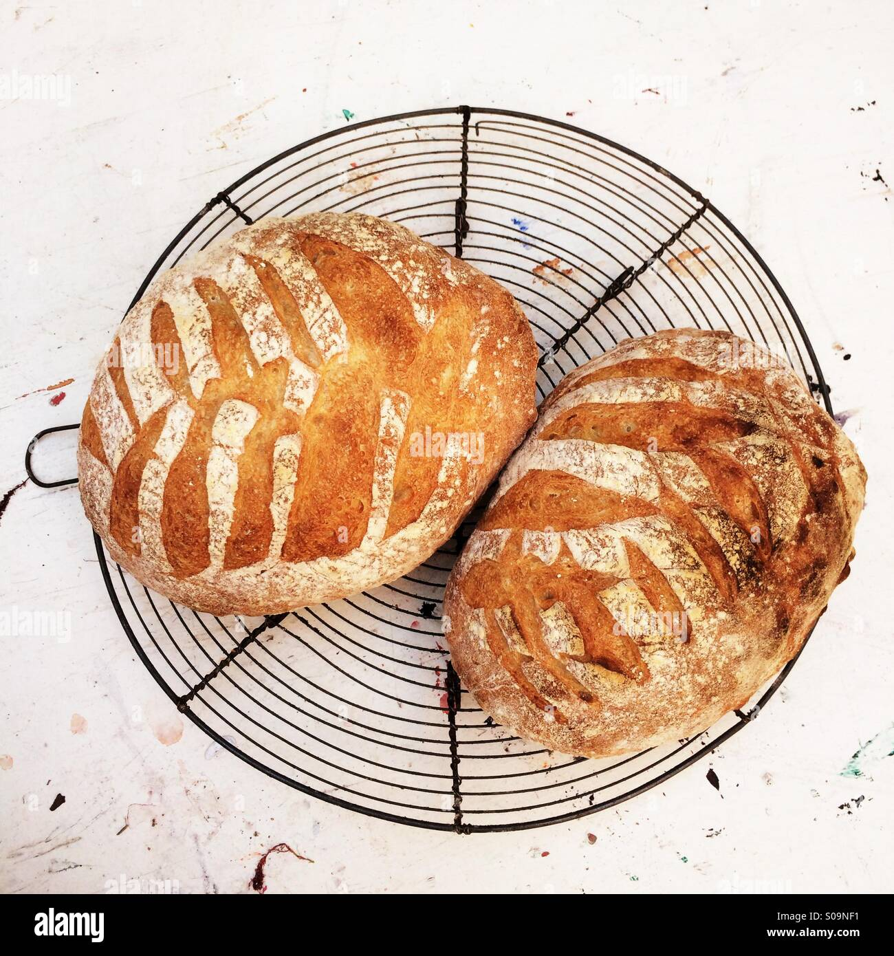 Two loaves of freshly baked homemade sourdough bread. - Stock Image