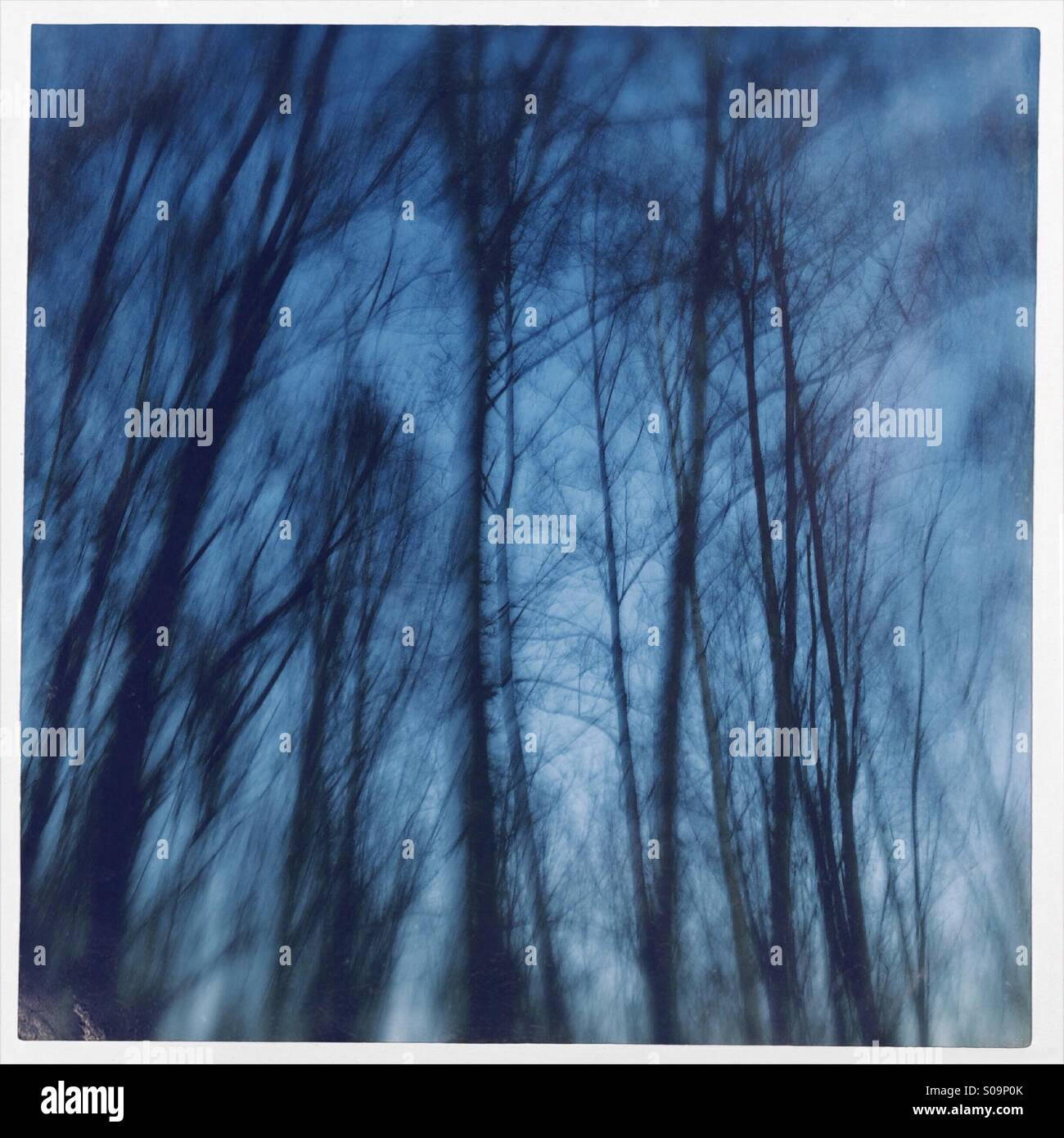 Abstract photo of trees taken at Flogbergets gruvor or in Dalarna, Sweden. - Stock Image