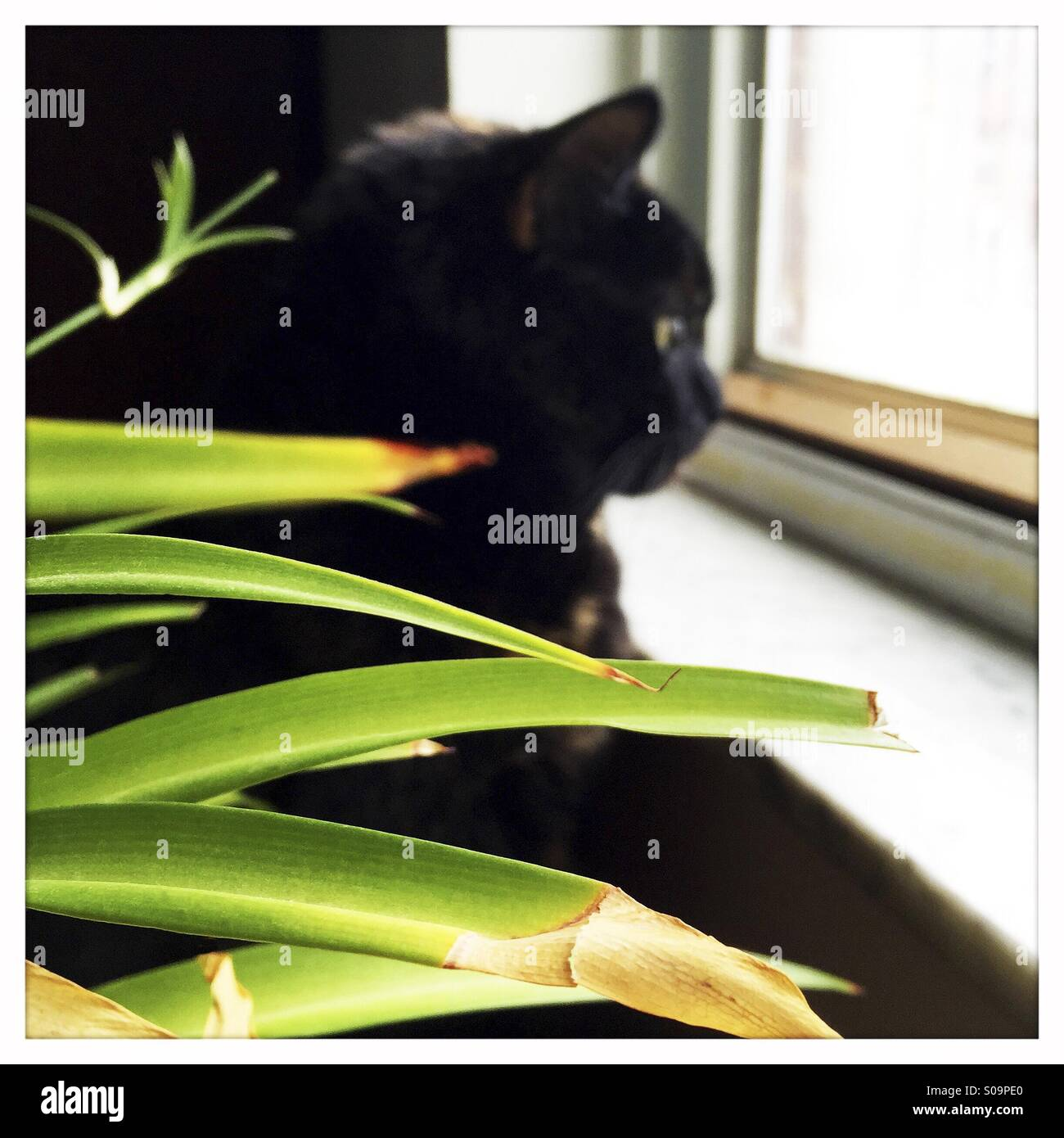Houseplant Cat Stock Photos Amp Houseplant Cat Stock Images