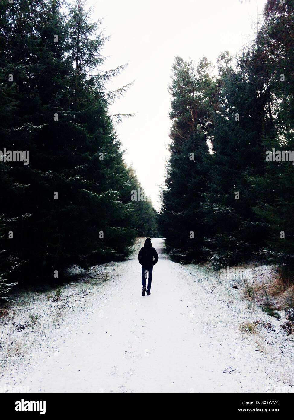A man walks through a forest on a solitary hike with snow on the ground in winter. - Stock Image