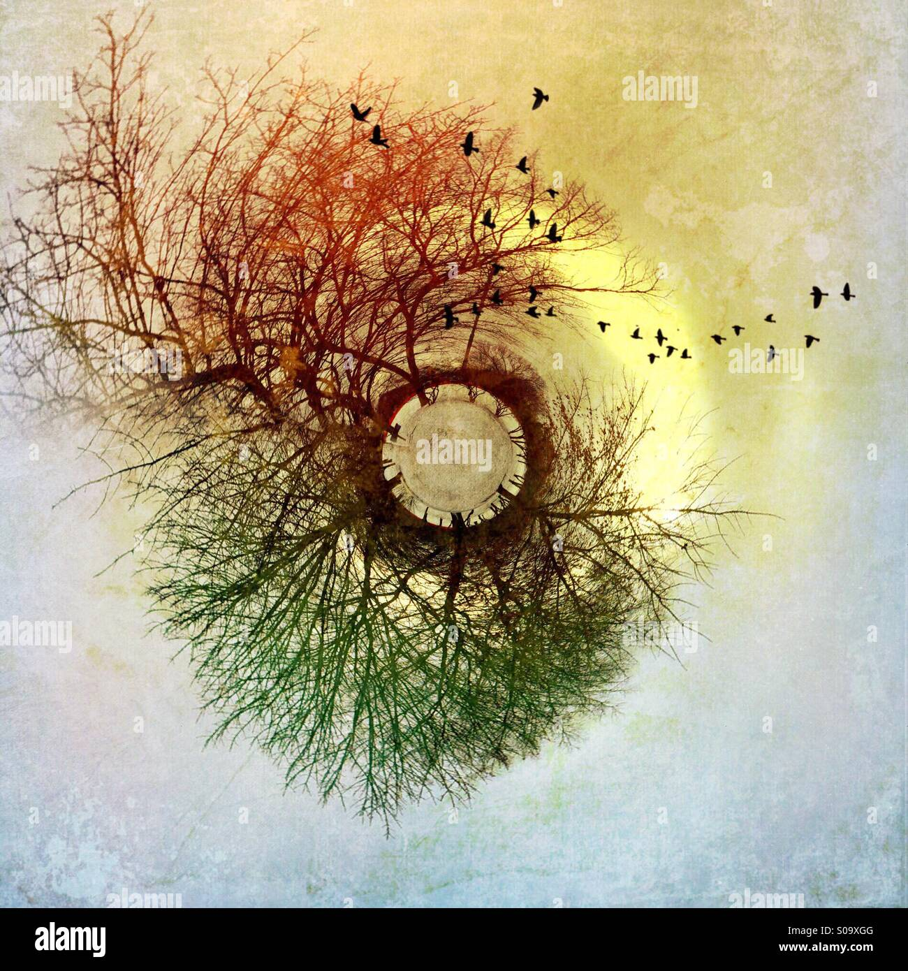 Trees and birds around a small planet. - Stock Image