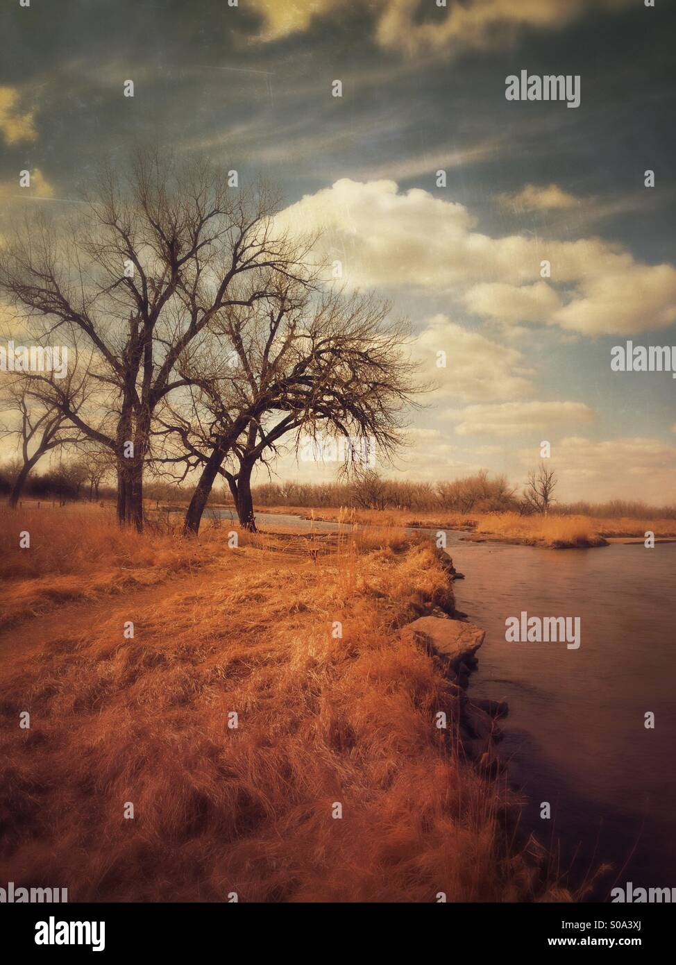 Trees along the riverbank. - Stock Image