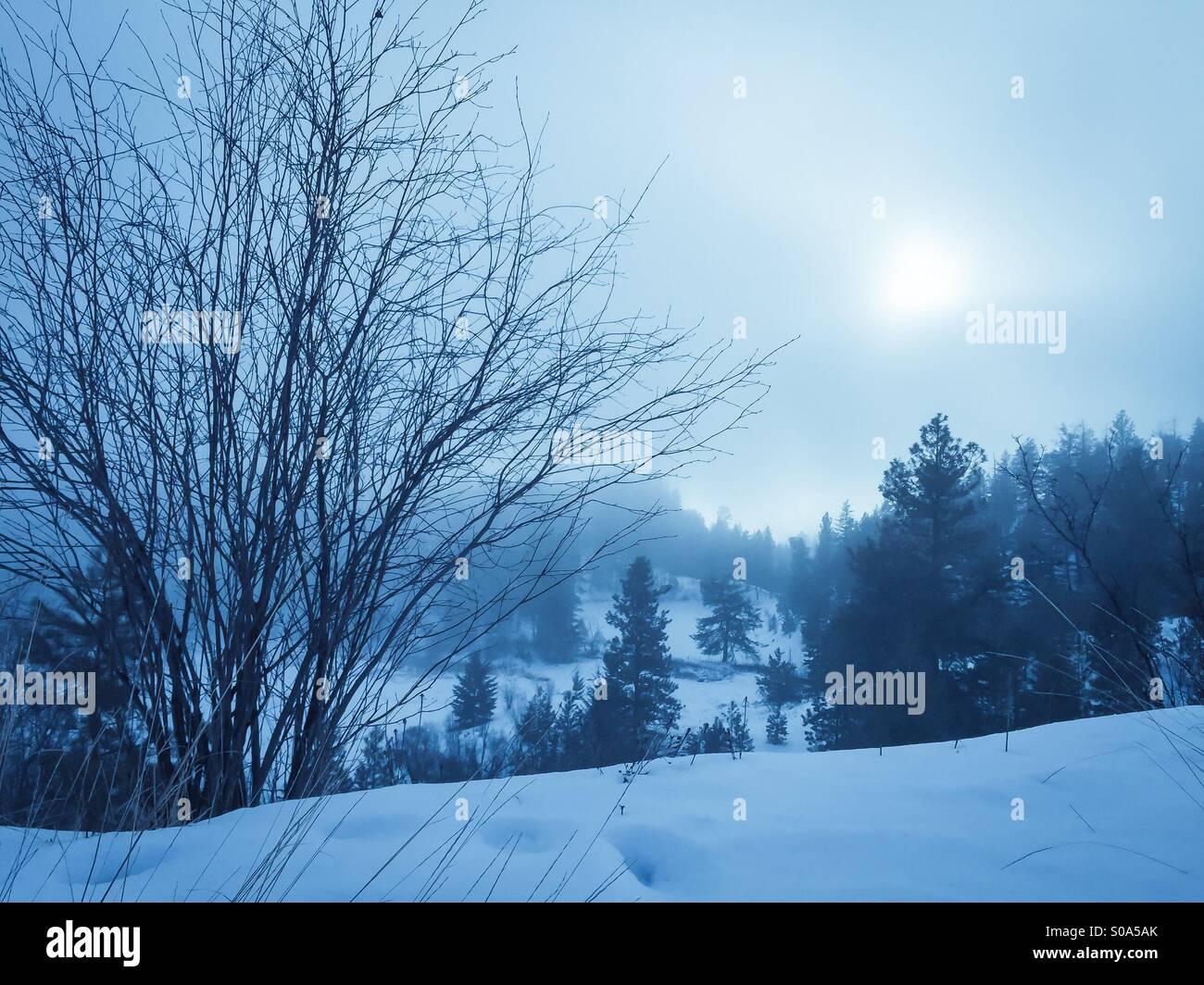 Winter landscape of fog covered evergreen forest. - Stock Image
