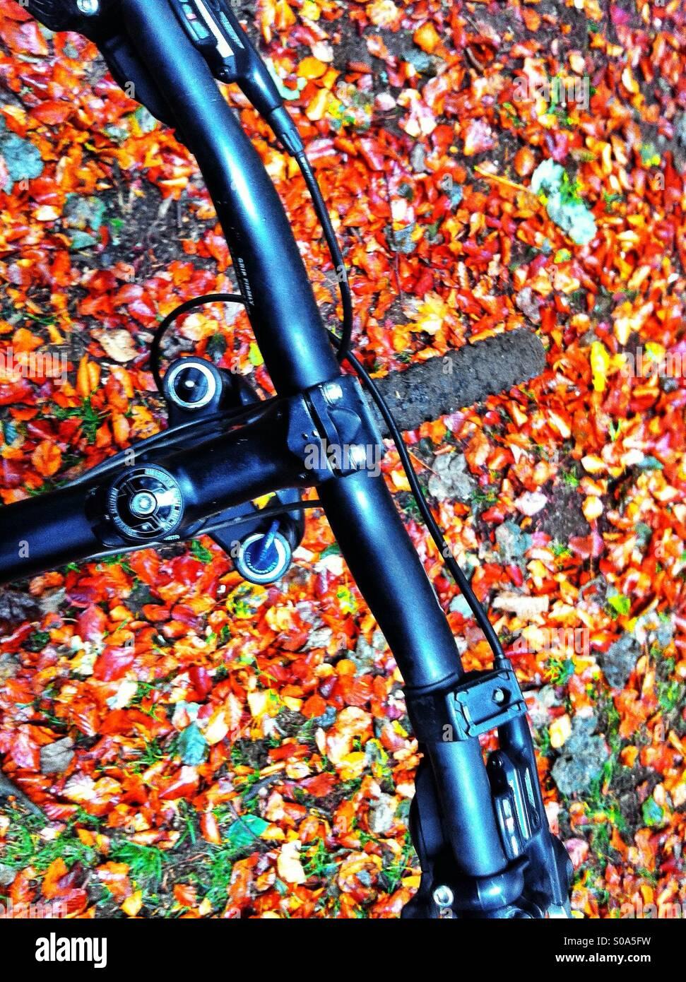 Overhead shot of mountain bike handlebars and autumn leaves on ground. - Stock Image