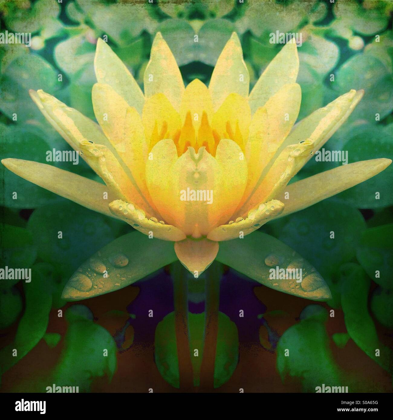 Yellow flower with lily pads stock photo 310011004 alamy yellow flower with lily pads izmirmasajfo Images