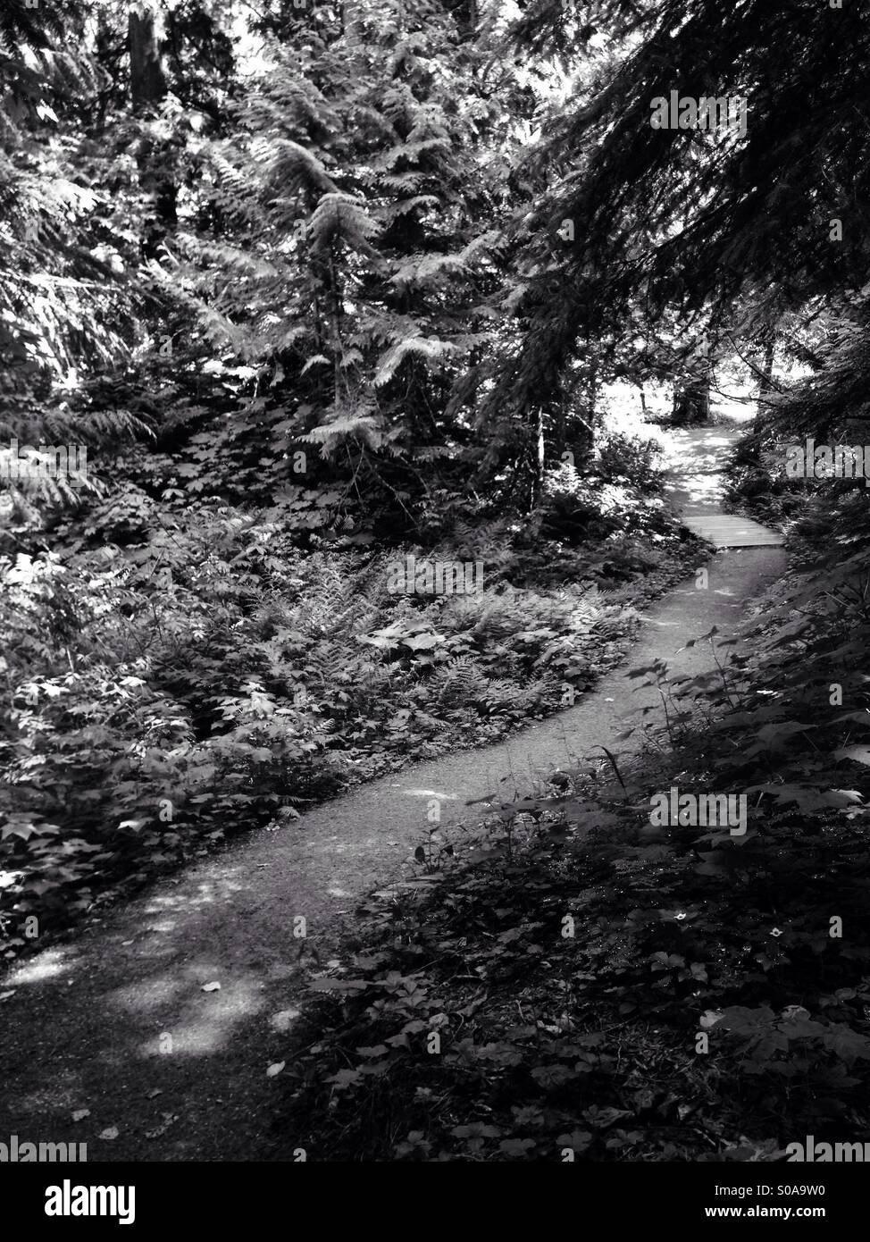 Path through forest in black and white - Stock Image