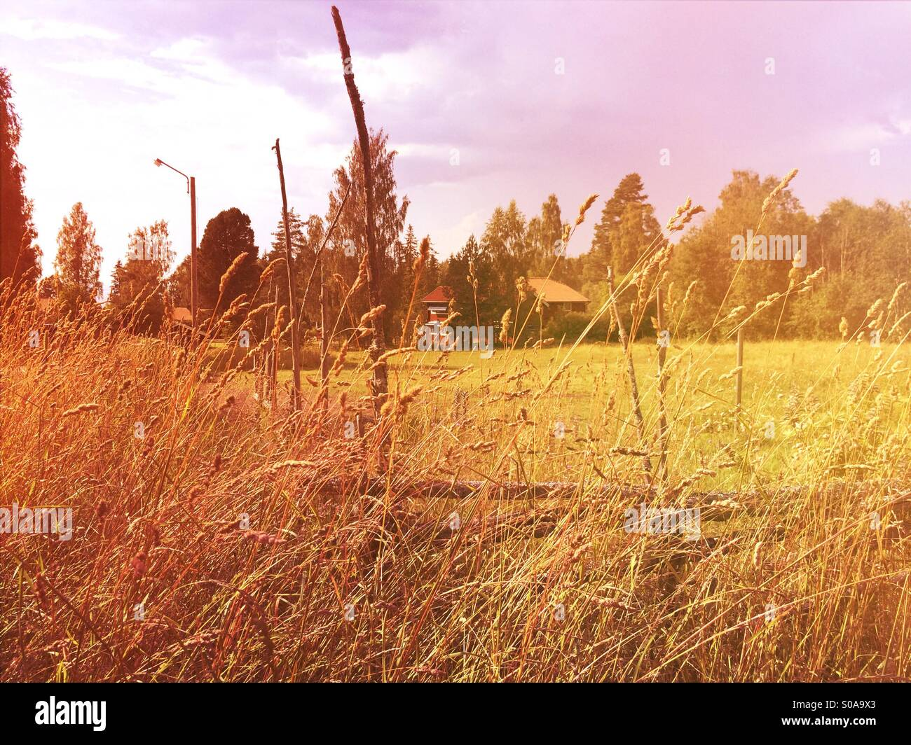 Long grass with traditional swedish wooden fence and house painted in Falu red in background, Tallber, Dalarna, - Stock Image