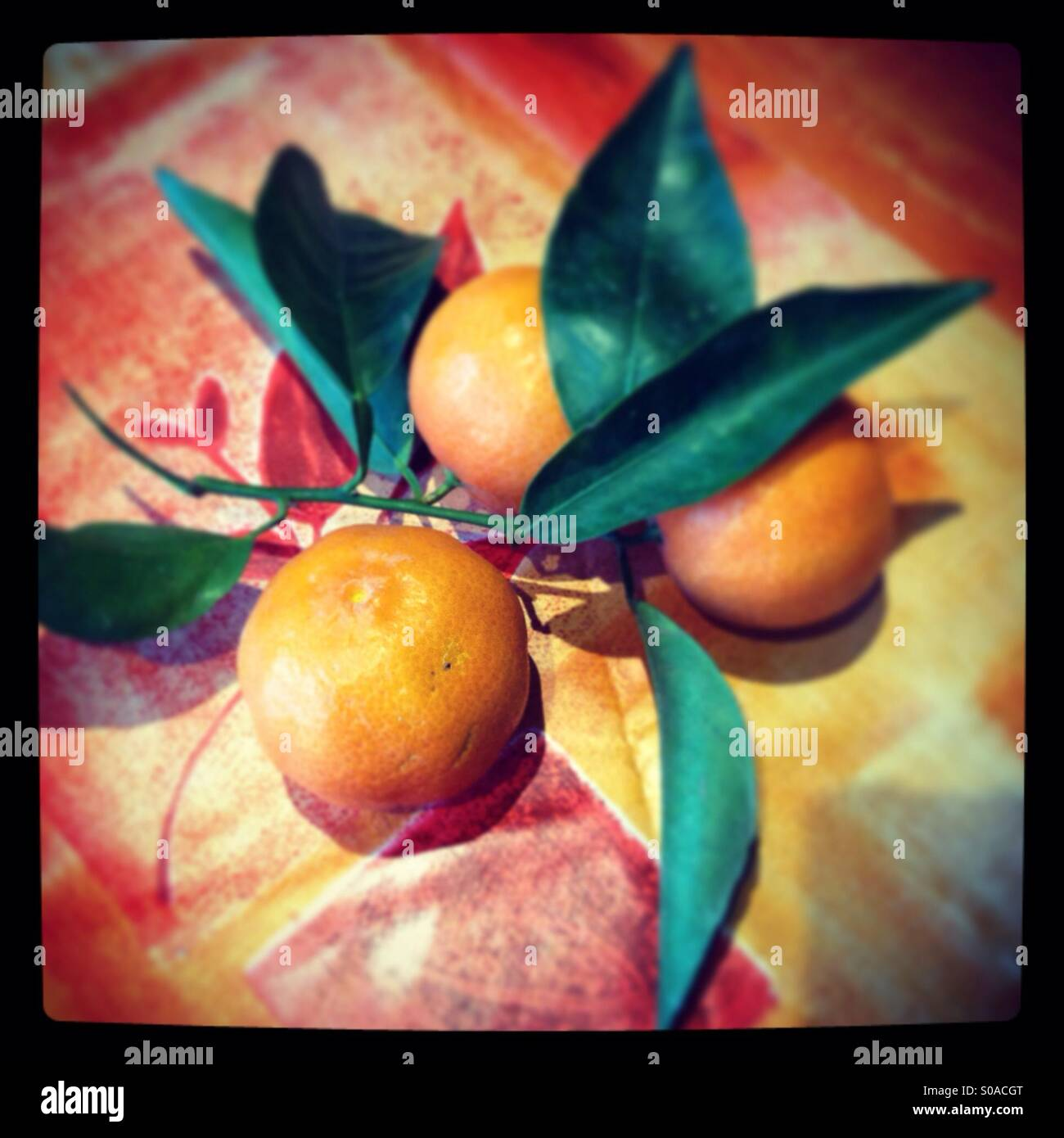 Oranges and leaves - Stock Image