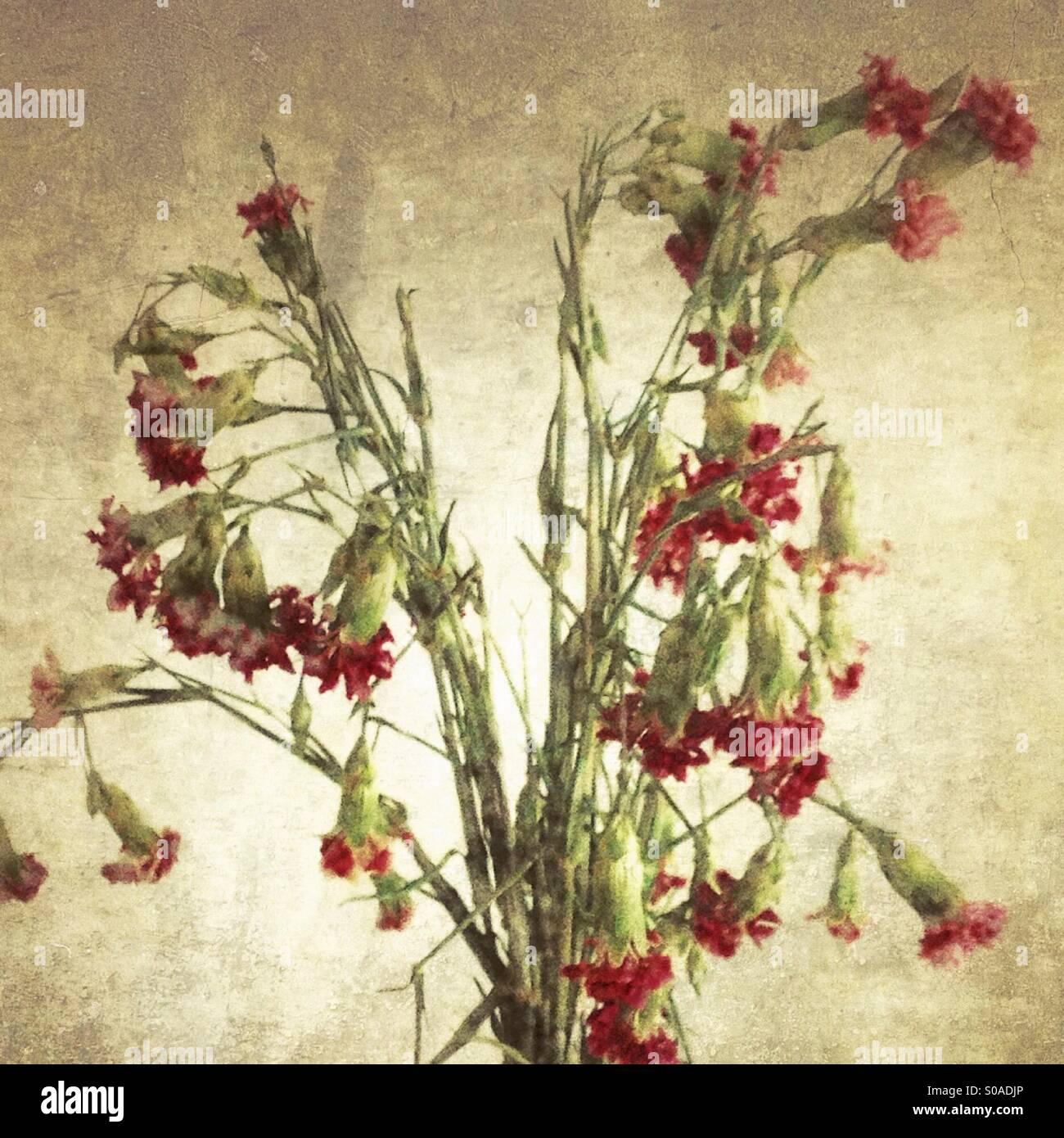 Dead Bouquet Flowers Stock Photos & Dead Bouquet Flowers Stock ...