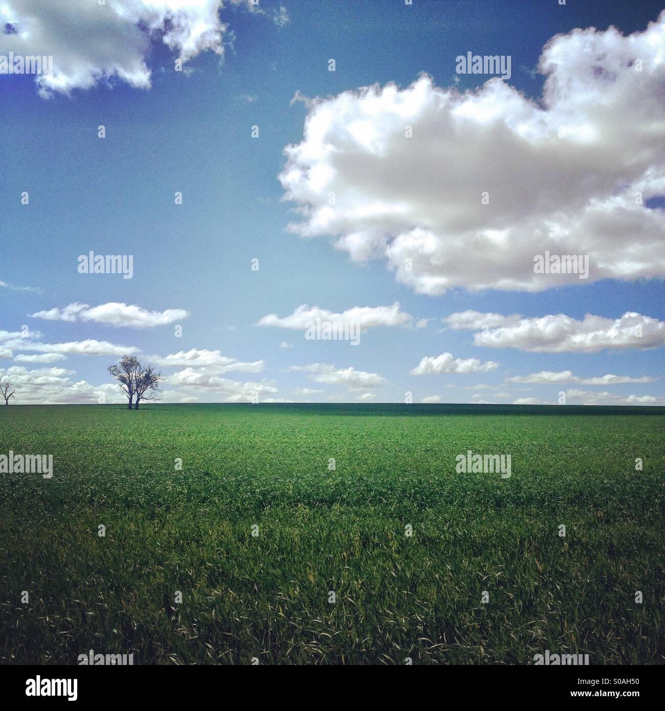 Rural Australia in summer - Stock Image