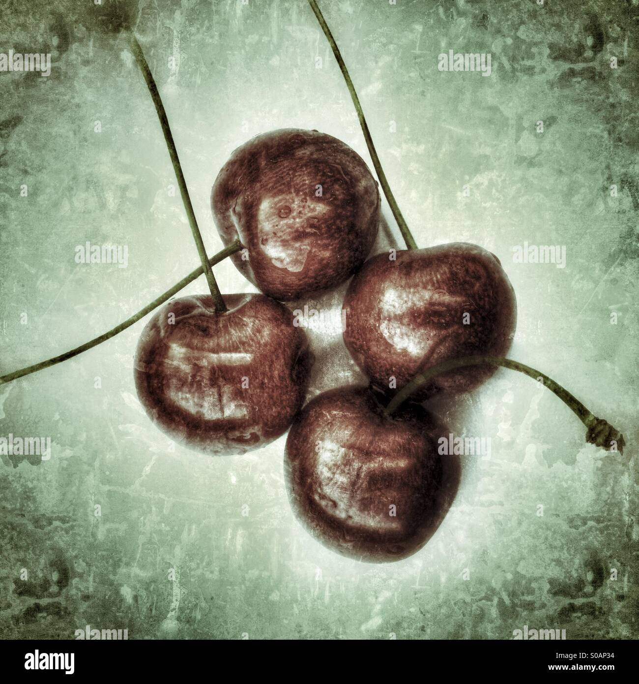 Dramatic images showing four cherries on a plain background - Stock Image