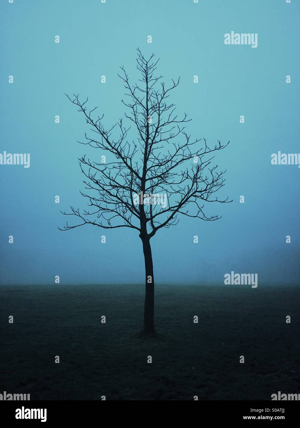 Lonely tree in the fog - Stock Image
