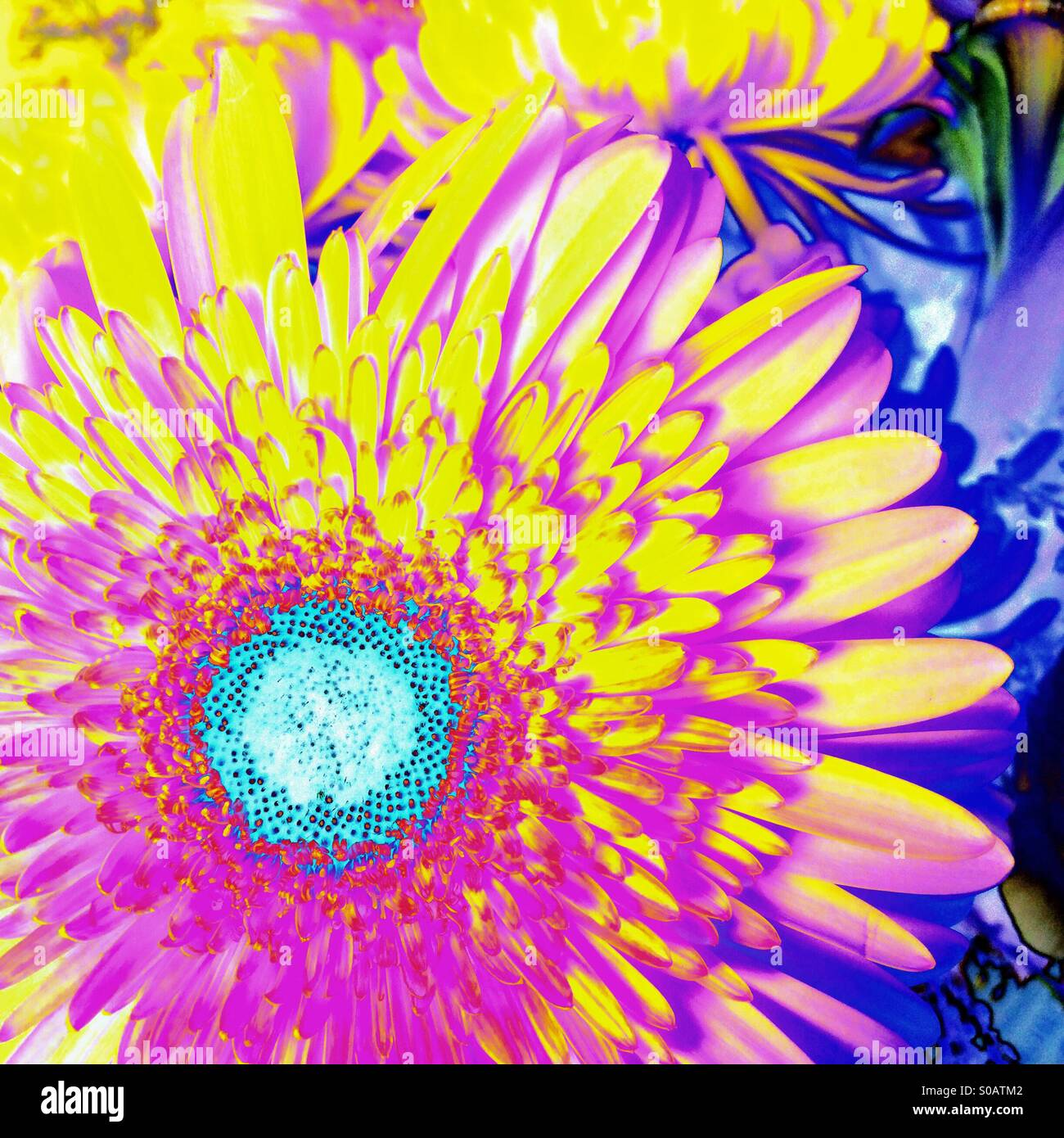Daisy type flower stock photos daisy type flower stock images alamy brightly psychedelic coloured daisy type flower stock image izmirmasajfo