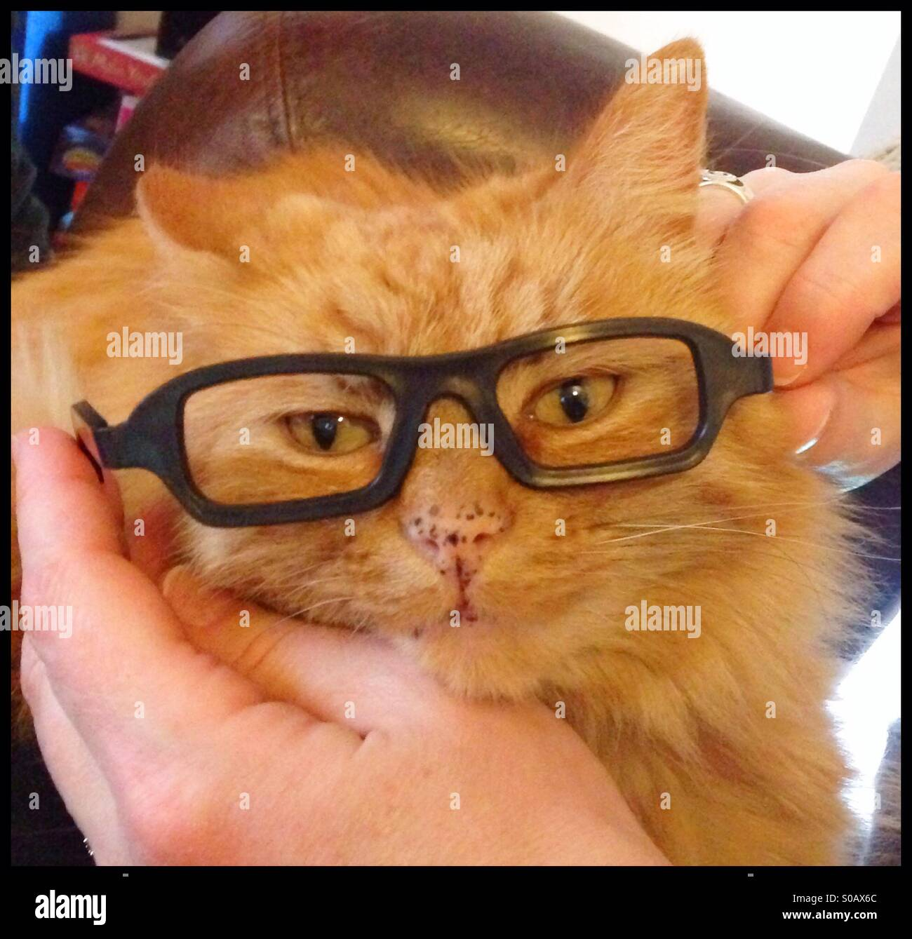 5b4899d0283 Cat Glasses Stock Photos   Cat Glasses Stock Images - Alamy