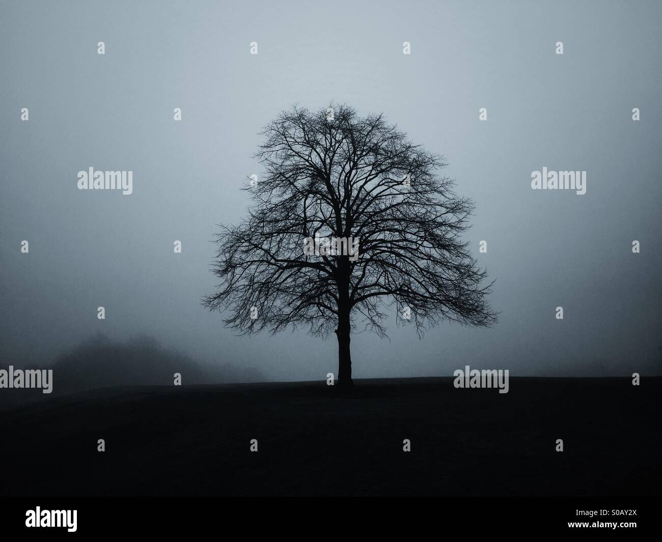 Single tree in the field - Stock Image