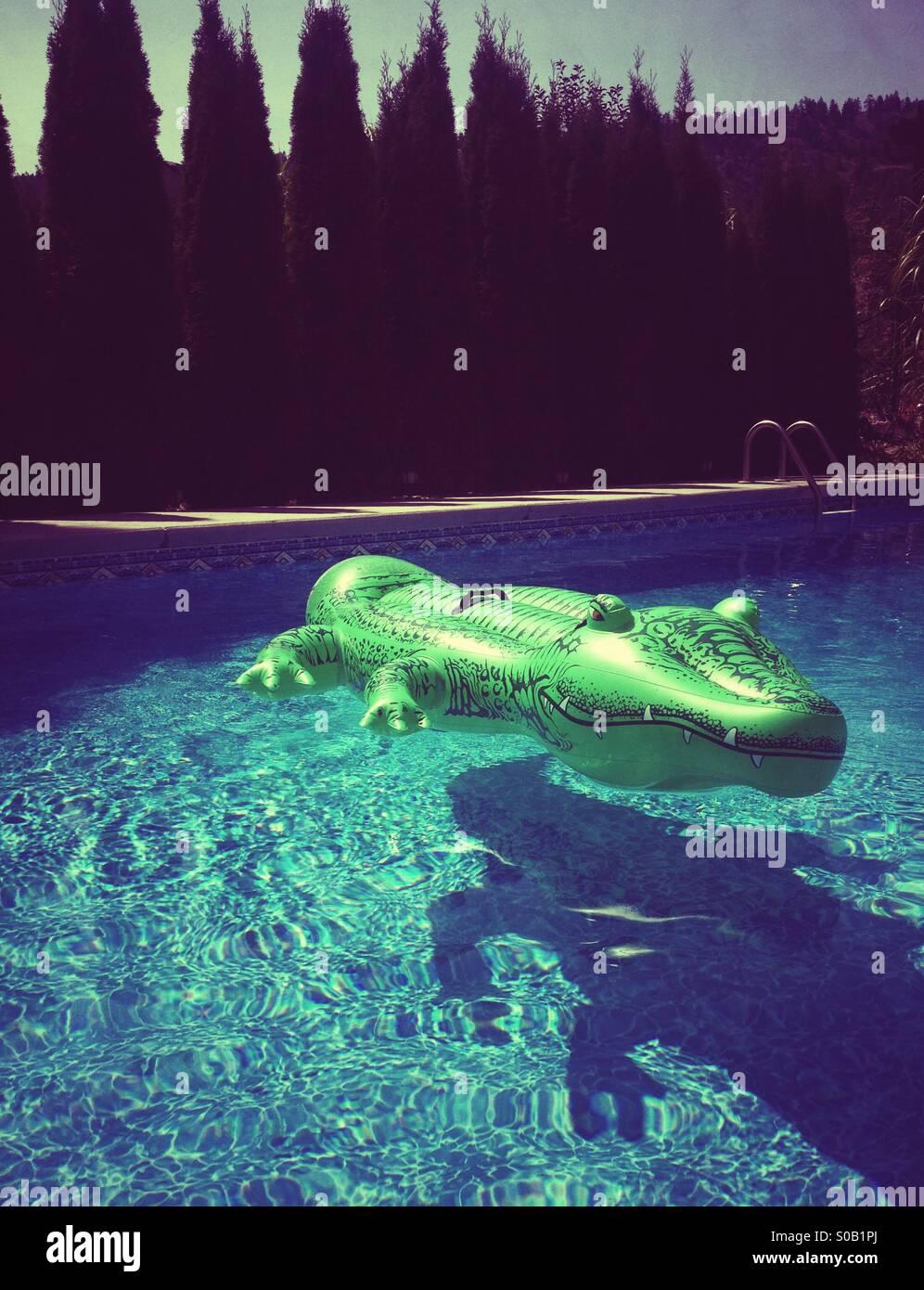Inflatable Alligator Pool Toy Floating In Backyard Swimming Pool, Itu0027s  Shadow Beneath.