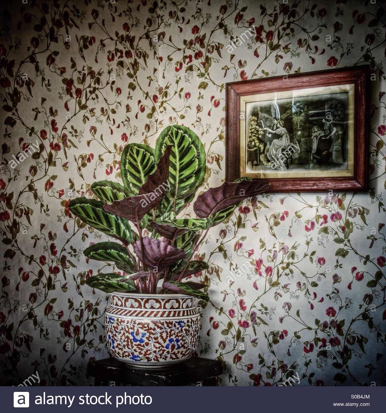 Nostalgia. A pot plant against old fashioned wallpaper with a framed vintage print on the wall. - Stock Image