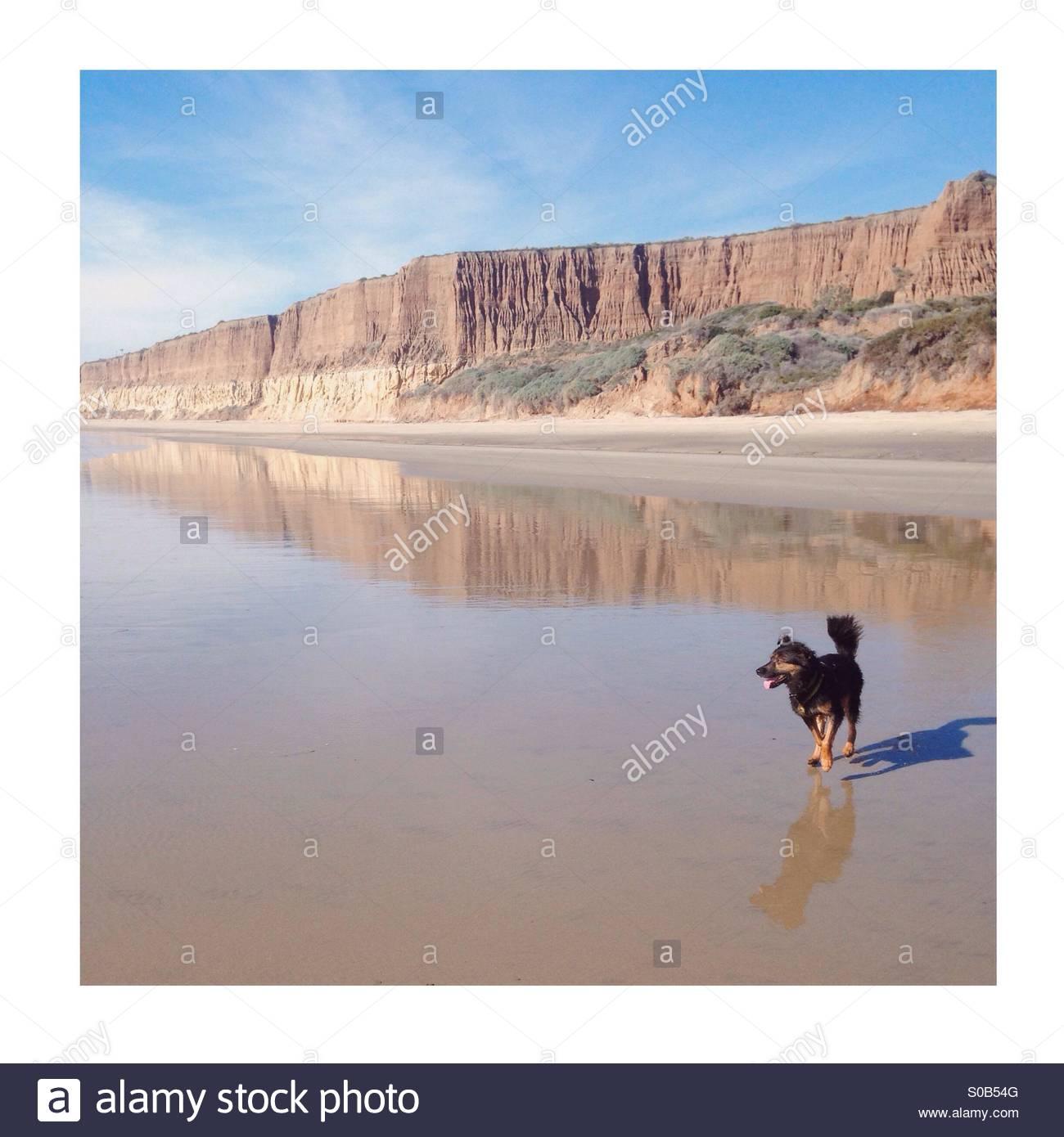 Beach bum - Stock Image