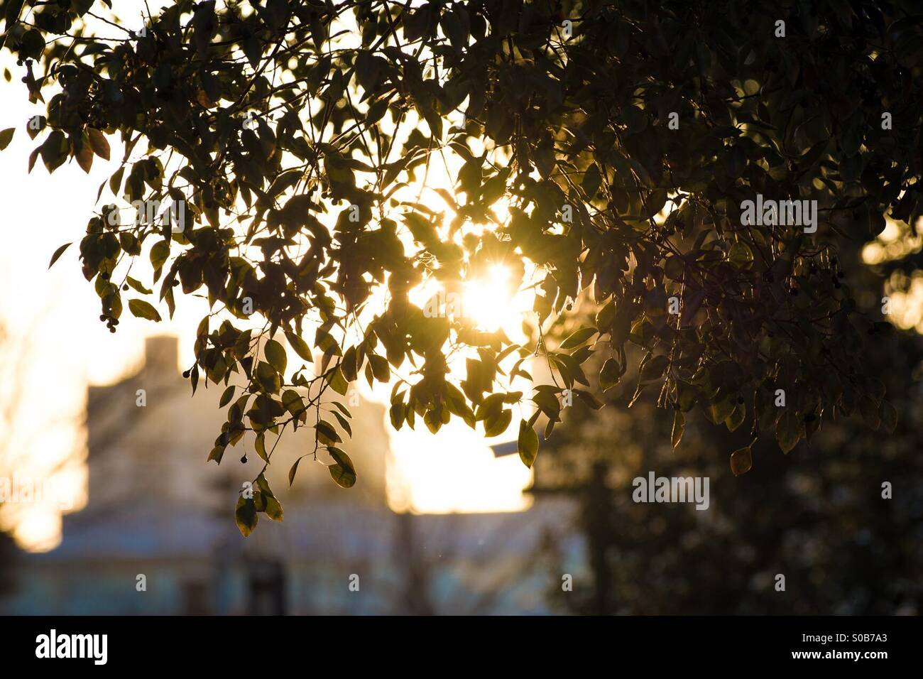 Glimmering leaves - Stock Image