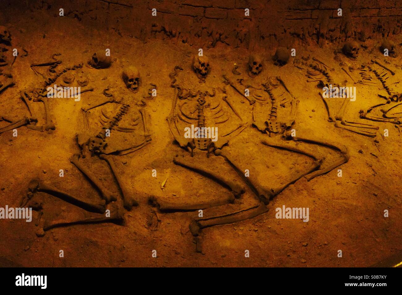 Skeletons in display, Museum of Anthropology, Mexico City - Stock Image