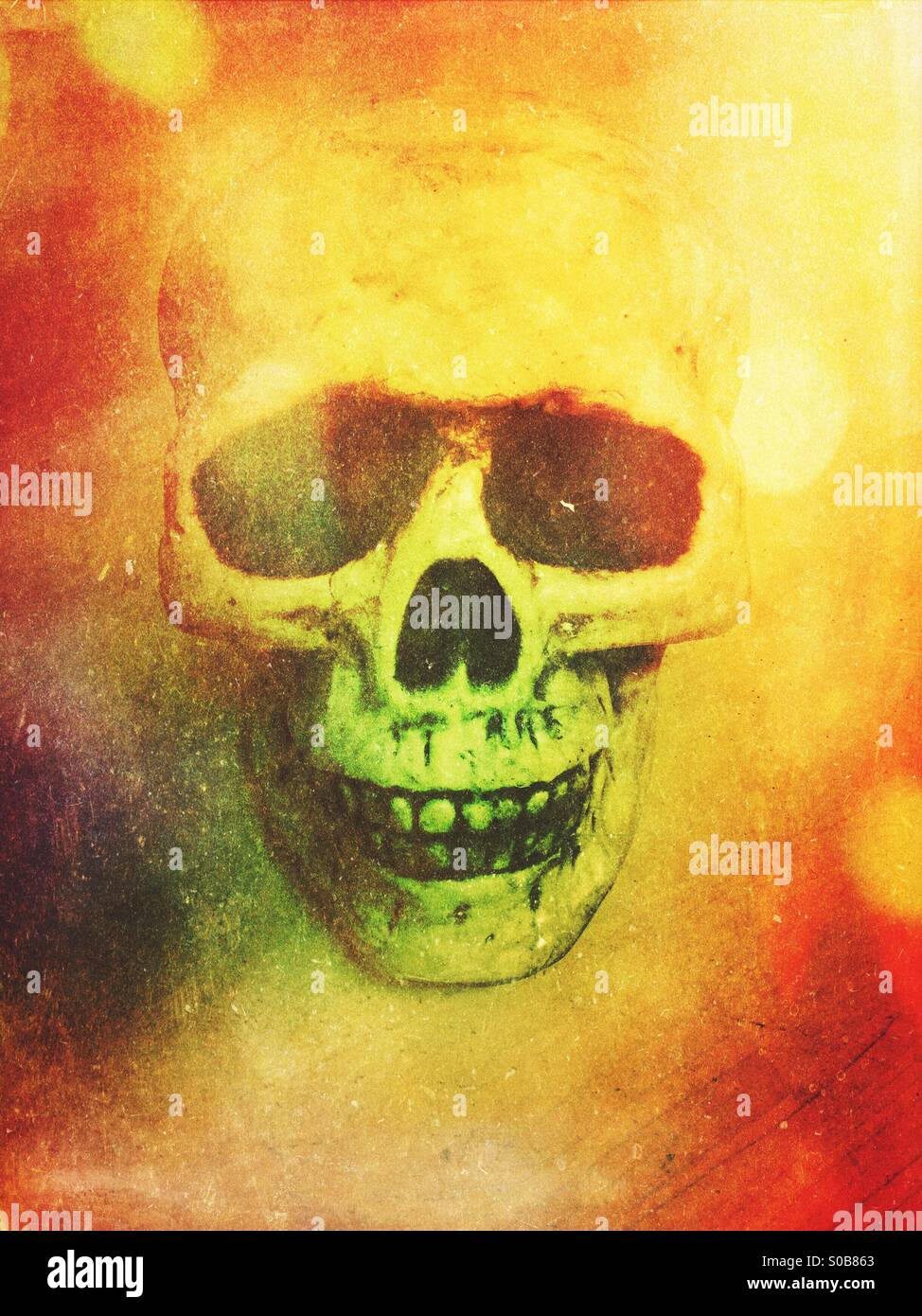 Skull - Stock Image
