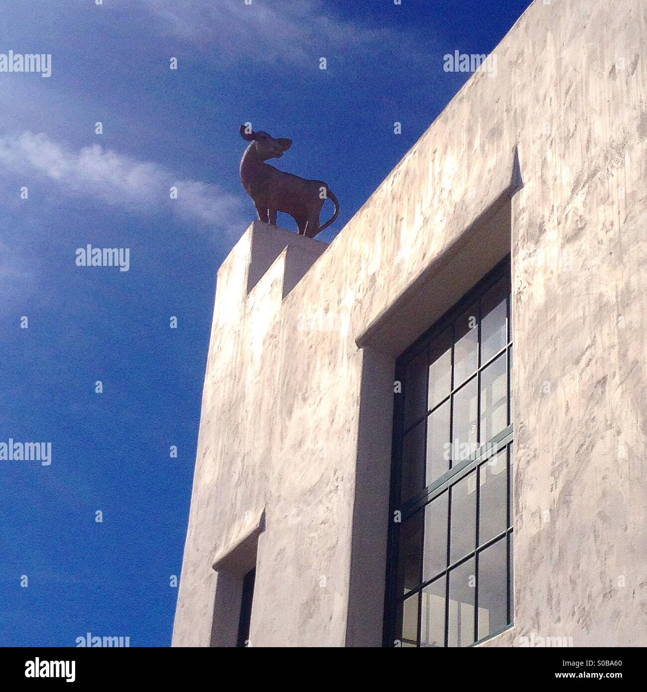 Calf on roof - Stock Image