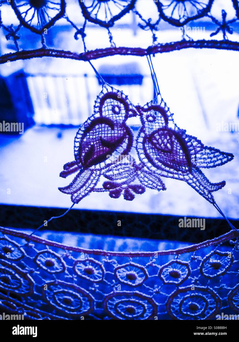 Blue lovebirds - Stock Image
