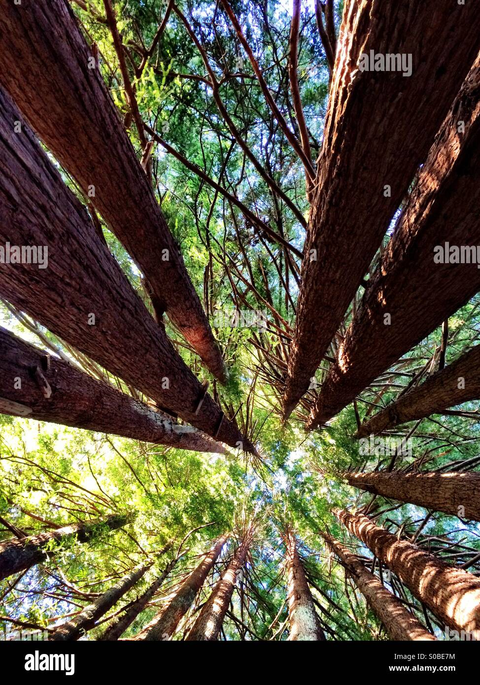 Up in the trees. - Stock Image