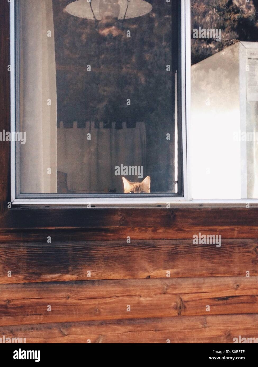 Cat peering out the window - Stock Image