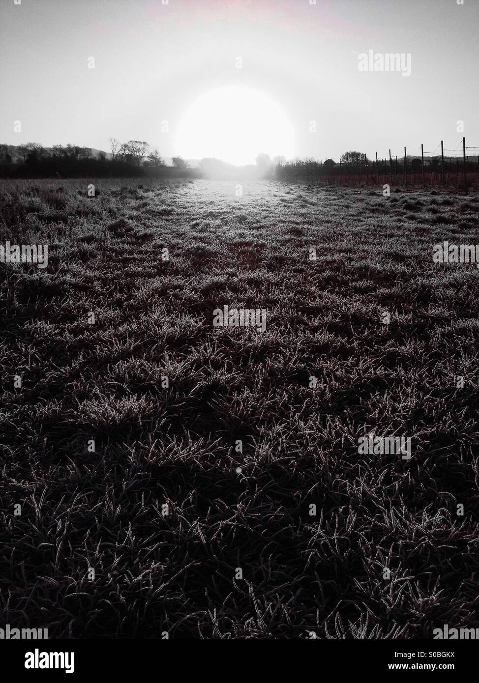 Rising sun over frosty field - Stock Image