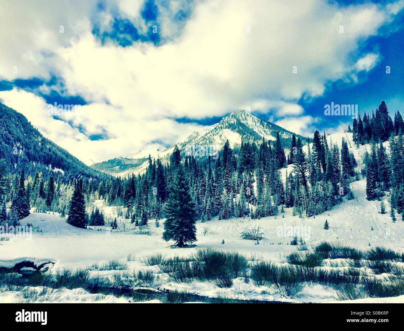 A pretty winters day up in Big Cottonwood Canyon near Salt Lake City in Utah is captured in this cross-processed - Stock Image