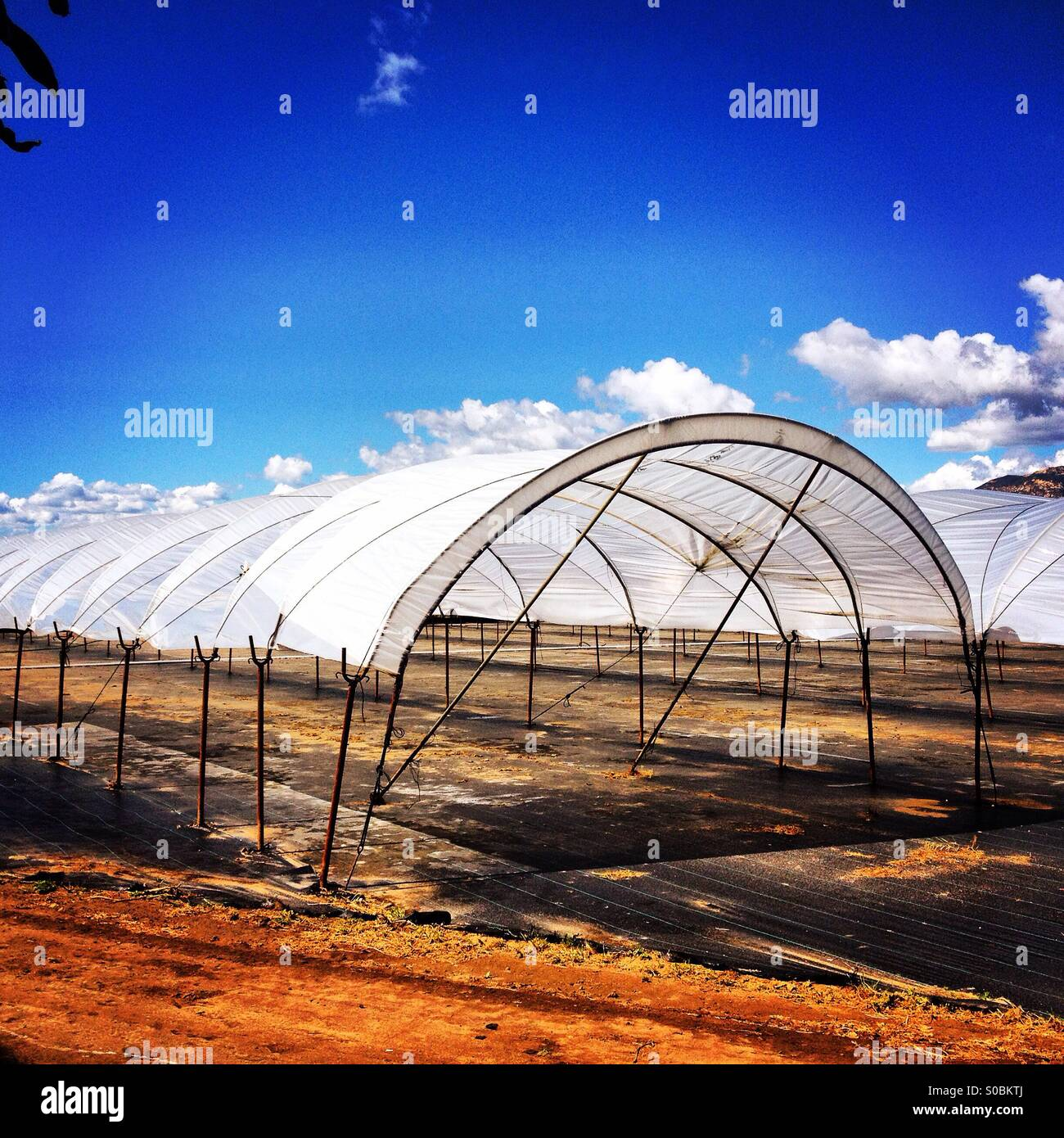 Farm field clear plastic coverings Stock Photo