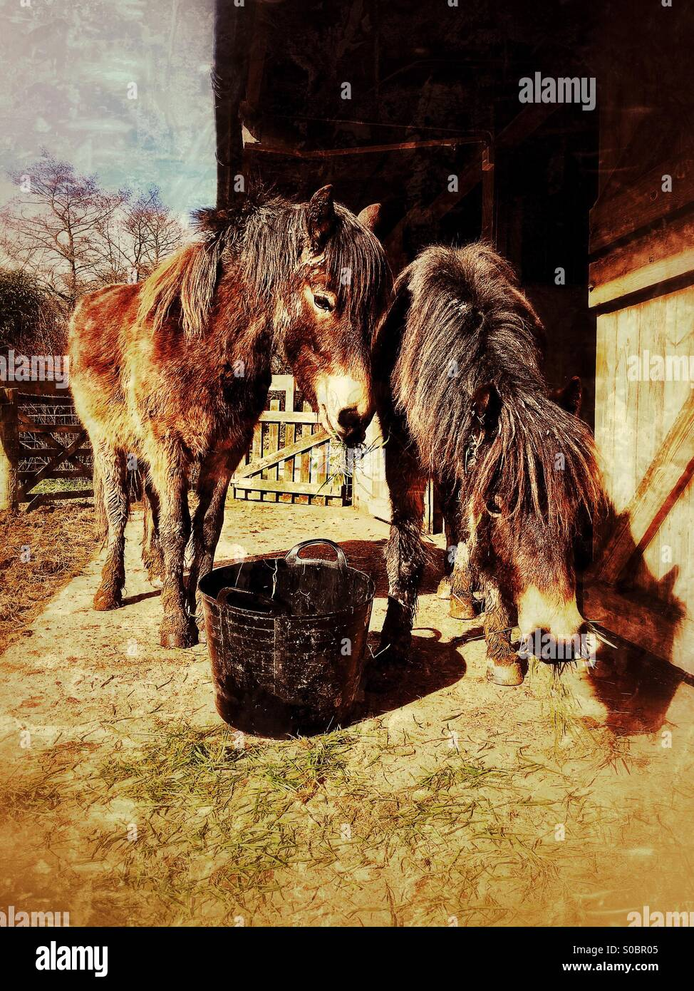 Mum has picked us some grass as we've trashed our muddy paddock!! - Stock Image