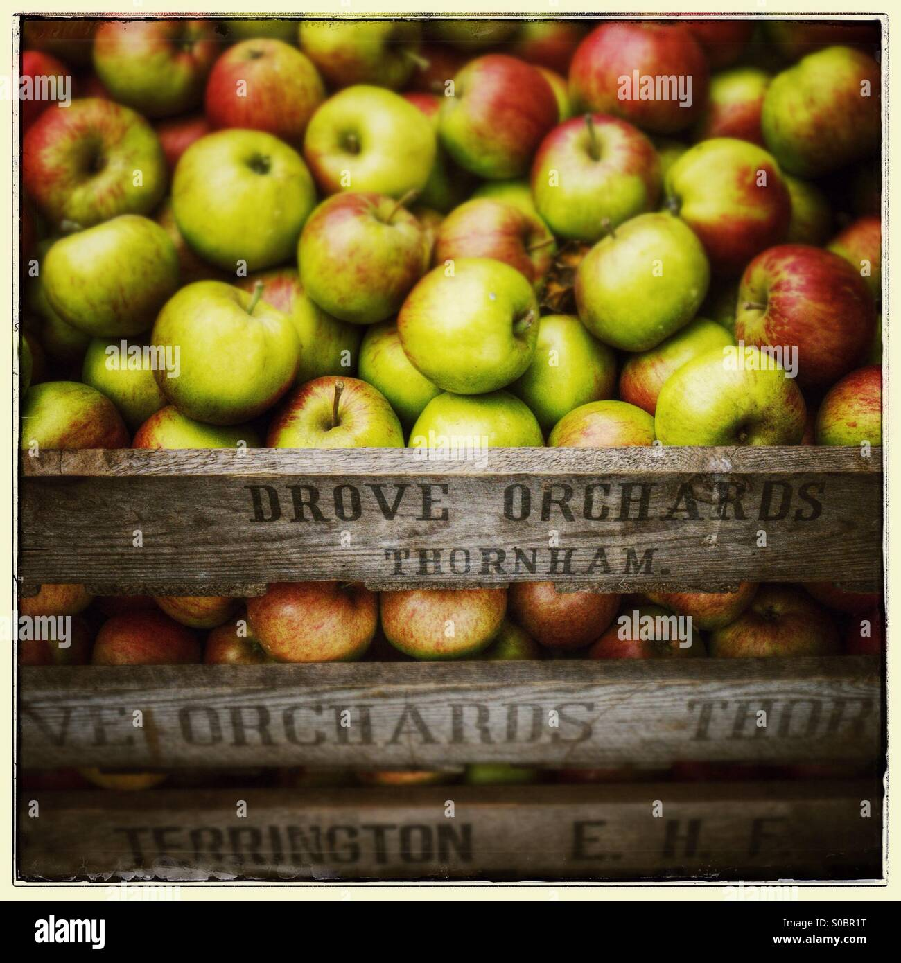 Apples in a wooden crate with sign denoting Drove Orchards, Thornham - Stock Image