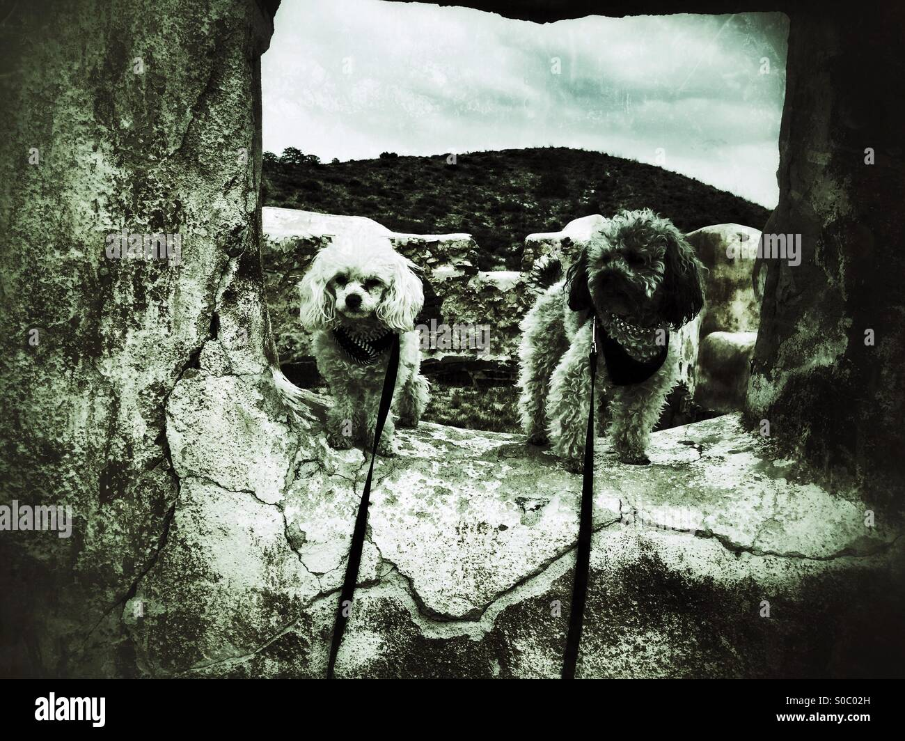 Poodles at Fort Bowie - Stock Image