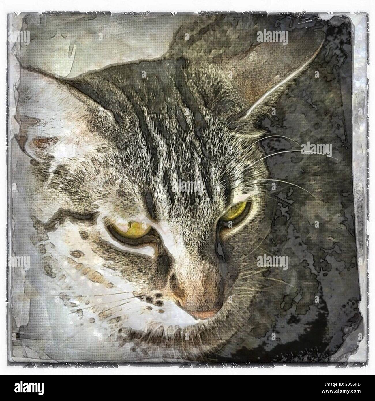 Abstract version of closeup of a tabby cat with green eyes - Stock Image