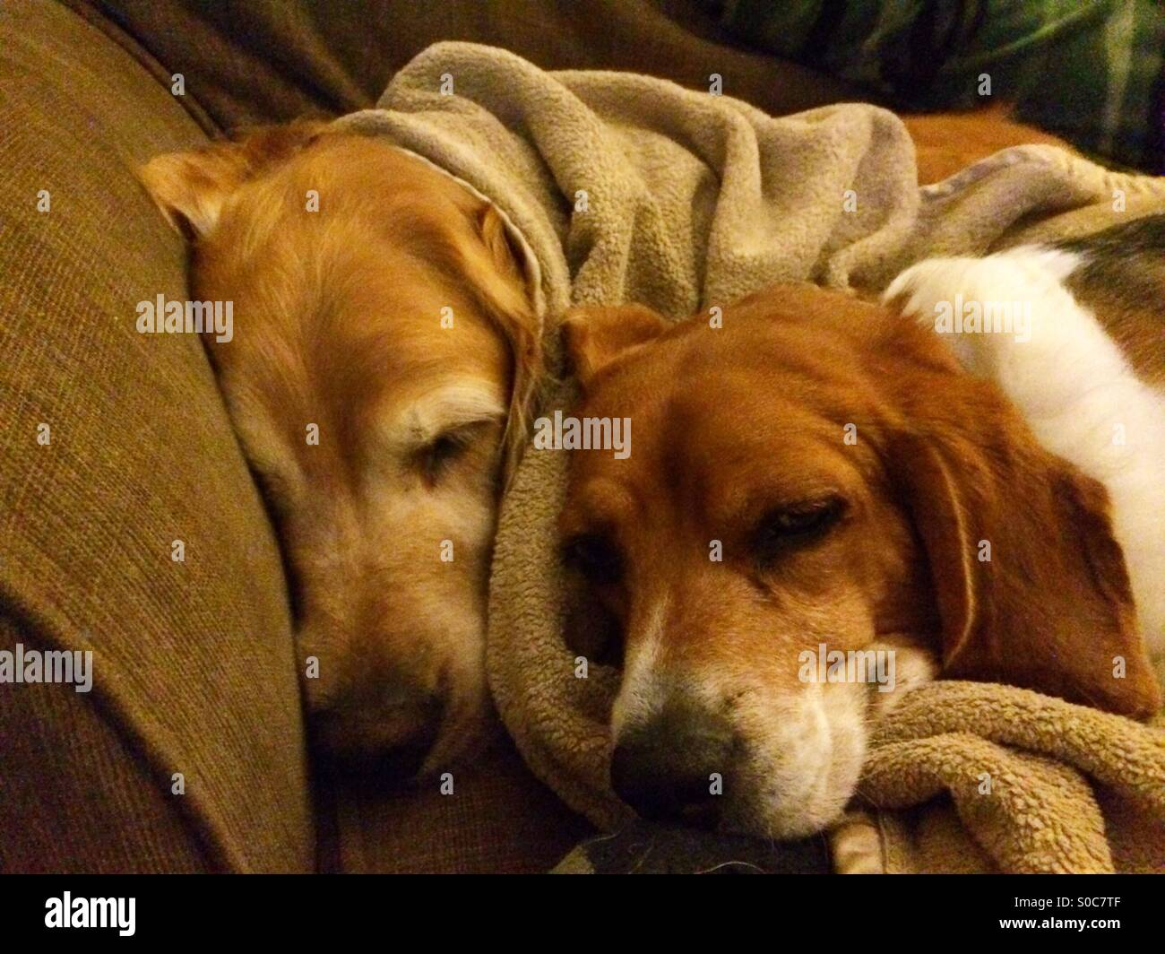 Dogs sleeping Stock Photo