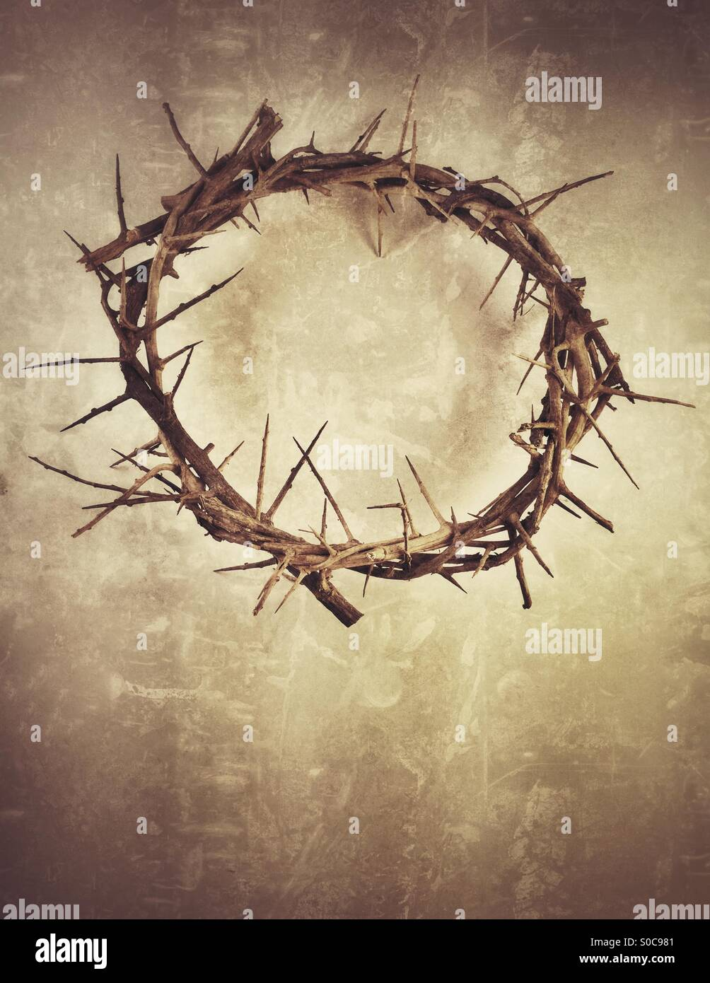Crown of Thorns - Stock Image