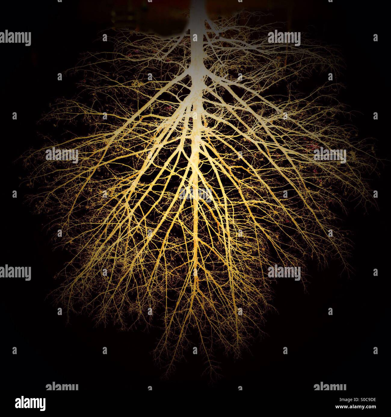 Tree, upside down, or is it roots? - Stock Image