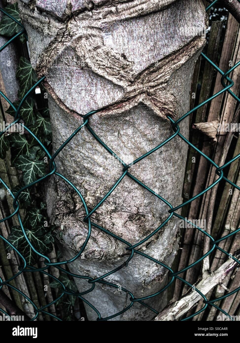 Tree growing into wire fence. - Stock Image