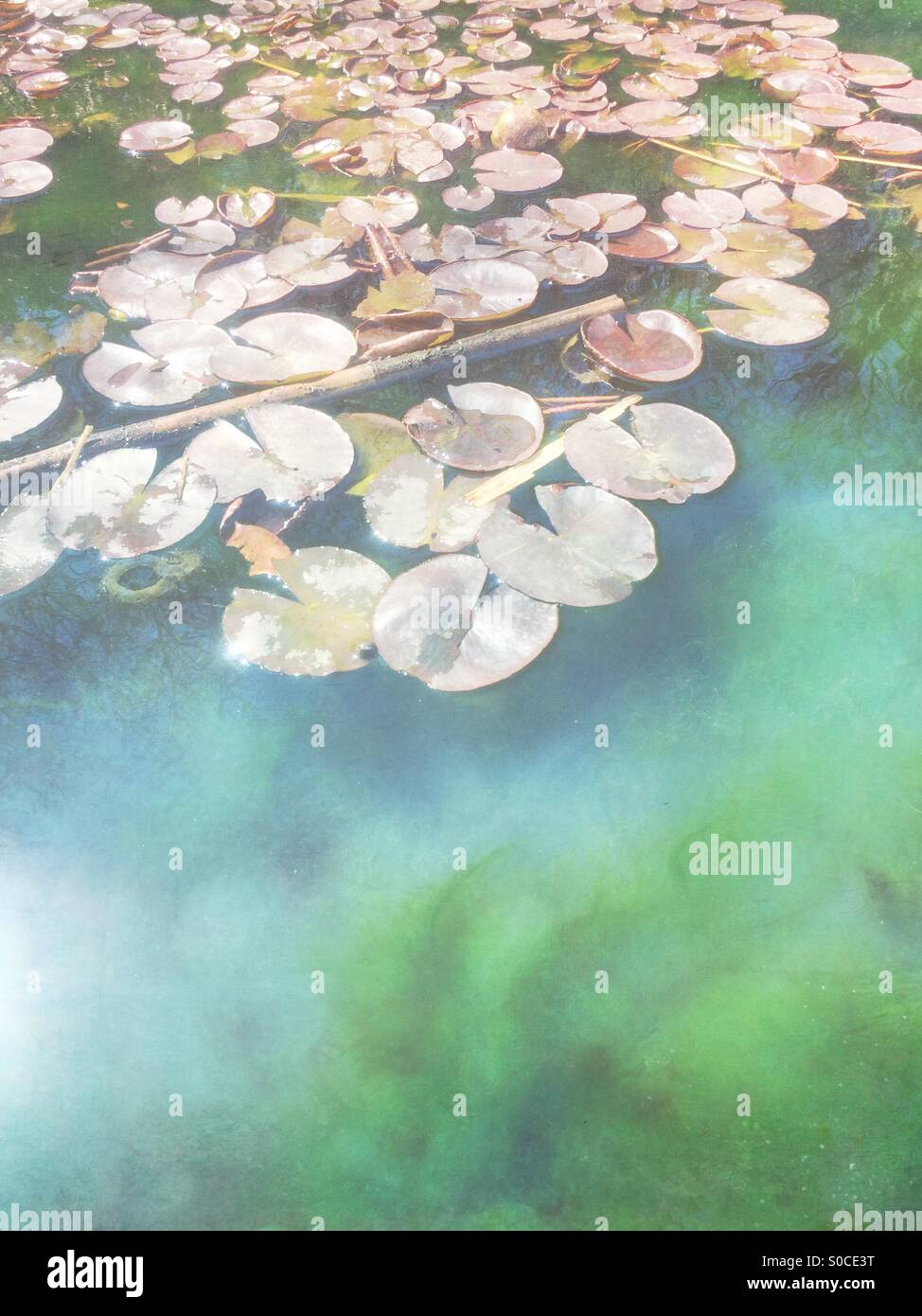 Waterlily pond in Spring, with painterly texture overlay. - Stock Image