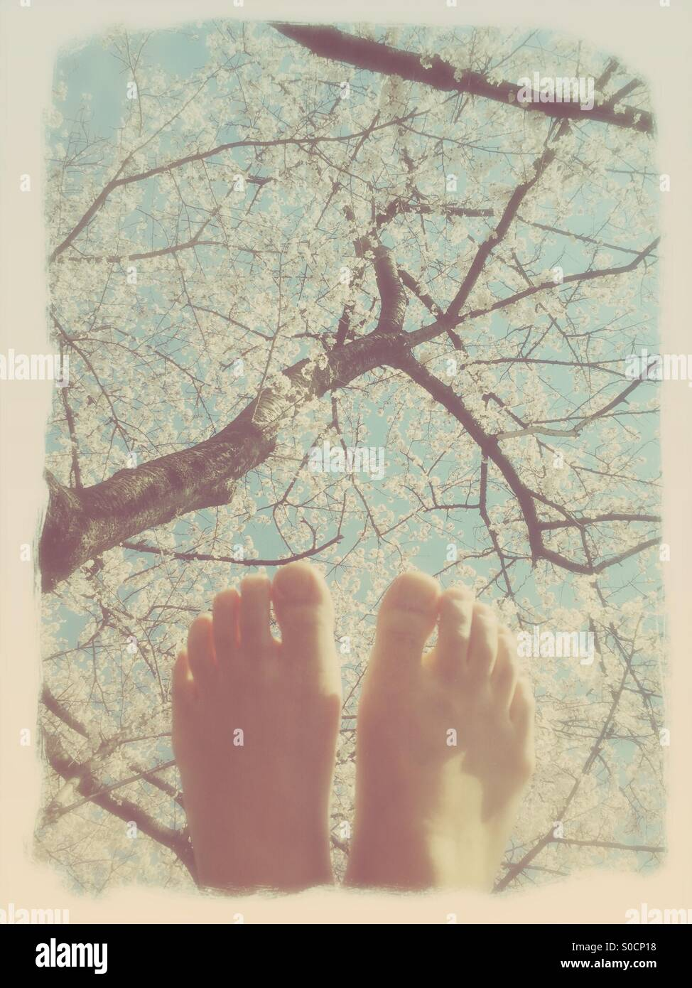Feet held up in front of white sakura or cherry blossoms in Spring, with soft blue sky and vintage paper texture - Stock Image