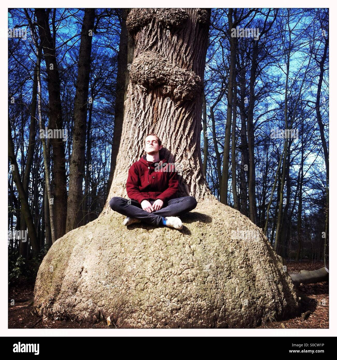 Young man meditating in a forest against a tree - Stock Image