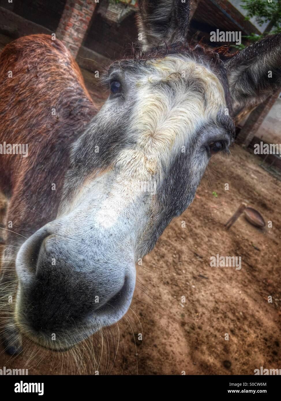 Punjab Farm Stock Photos & Punjab Farm Stock Images - Alamy