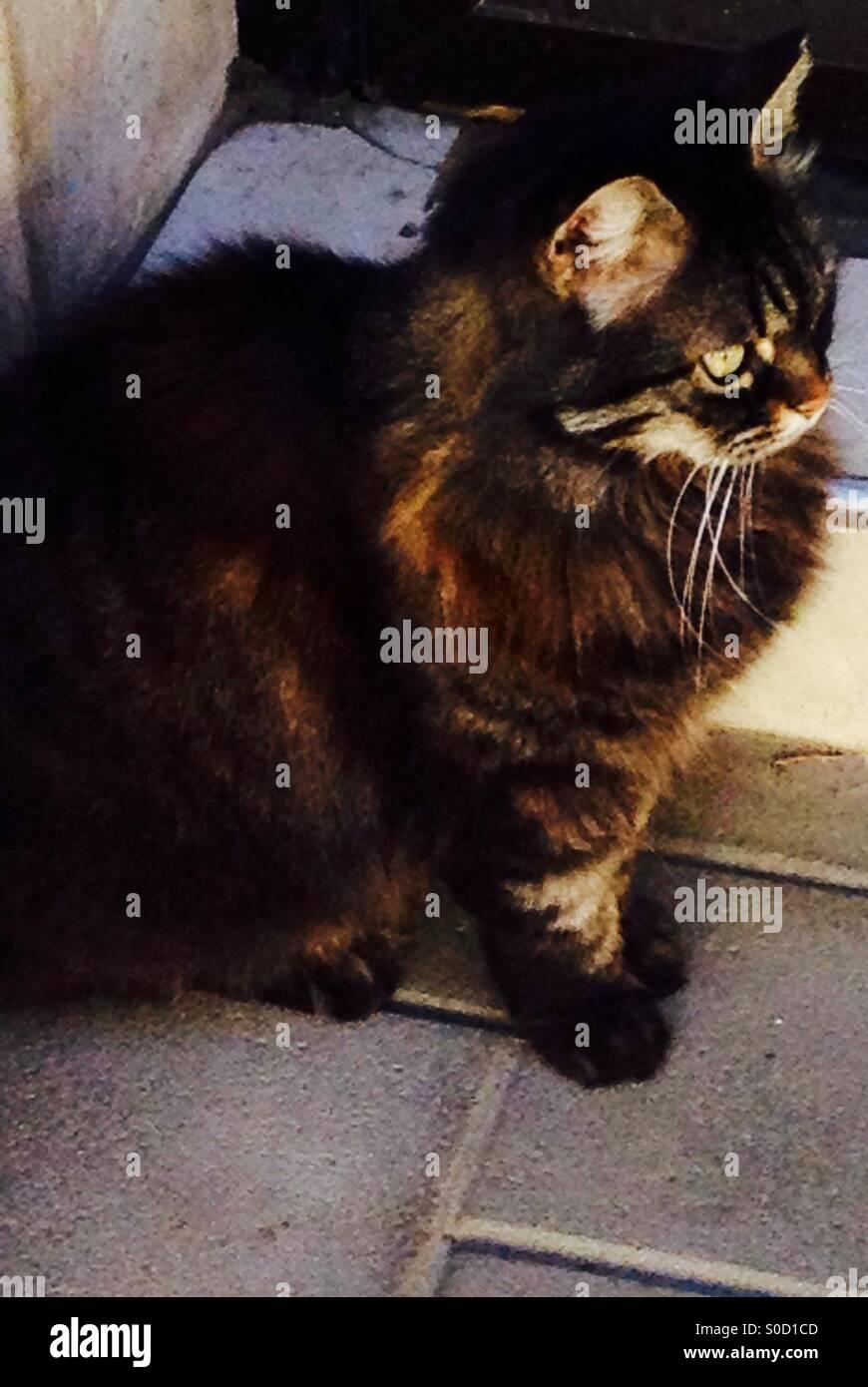 Moggy cat Stock Photo